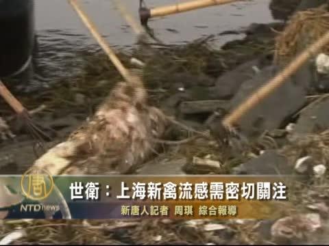 世卫生上海新禽流需密切关注