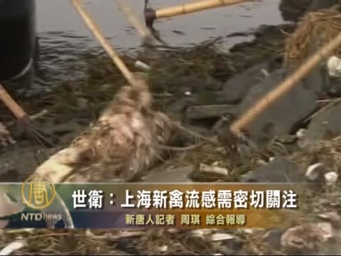 [粤语] 世卫:上海新禽流感需密切关注